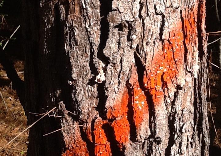 treestripe